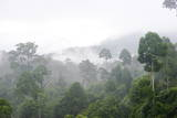 Mist Rises from Primary Rainforest at Dawn Photographic Print by Louise Murray