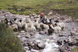 Herding Alpacas and Llamas Through a River in the Andes, Peru, South America Photographic Print by Peter Groenendijk