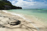 Sea Turtle, Anse Source D'Argent Beach, La Digue, Seychelles, Indian Ocean, Africa Photographic Print by Sergio Pitamitz