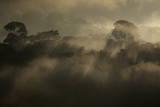Rising Rainforest Mist, Peru, South America Photographic Print by Colin Brynn