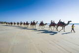 Tourists Riding on Camels on Cable Beach, Broome, Western Australia, Australia, Pacific Photographic Print by Michael Runkel