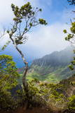 Kalalau Lookout over the Napali Coast from the Kokee State Park Fotografisk trykk av Michael Runkel
