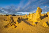 The Pinnacles Limestone Formations at Sunset in Nambung National Park Photographic Print by Michael Runkel