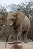 Bull Desert Elephant, Damaraland, Namibia, Africa Photographic Print by Bhaskar Krishnamurthy