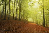 Beech Forest and Morning Fog, Hunsrueck, Rhineland-Palatinate, Germany, Europe Fotografisk tryk af Jochen Schlenker