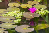 Water-Lilies Photographic Print by Michael Nolan