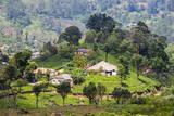 Houses on a Tea Estate in Haputale, Sri Lanka Hill Country, Sri Lanka, Asia Fotografie-Druck von Matthew Williams-Ellis