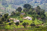 Houses on a Tea Estate in Haputale, Sri Lanka Hill Country, Sri Lanka, Asia Photographic Print by Matthew Williams-Ellis