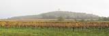 Vineyard, Northern Burgenland, Burgenland, Austria, Europe Photographic Print by Karl Thomas