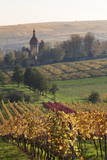 Vineyards in Autumn, German Wine Route, Pfalz, Rhineland-Palatinate, Germany, Europe Photographic Print by Marcus Lange