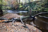 Fallen Tree by the River Nidd at Knaresborough Photographic Print by Mark Sunderland