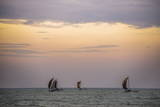 Negombo, Traditional Outrigger Fishing Boats (Oruva) Returning to Negombo Fishing Market, Sri Lanka Stampa fotografica di Matthew Williams-Ellis