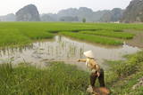 Fishing in the Rice Fields, Tam Coc, Ninh Binh Area, Vietnam, Indochina, Southeast Asia, Asia Photographic Print by Bruno Morandi