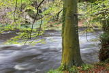 Autumn Tree by the River Nidd in Autumn Photographic Print by Mark Sunderland