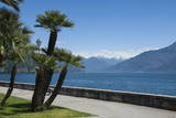 Lakeside Gardens at Menaggio, Lake Como, Italian Lakes, Lombardy, Italy, Europe Photographic Print by James Emmerson