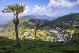 Haputale and a Tea Estate, Sri Lanka Hill Country, Nuwara Eliya District, Sri Lanka, Asia Fotografie-Druck von Matthew Williams-Ellis