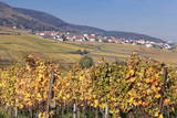 View over the Vineyards to Weyher in Autumn Photographic Print by Marcus Lange