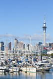 Westhaven Marina and City Skyline, Waitemata Harbour, Auckland, North Island, New Zealand, Pacific Photographic Print by Douglas Pearson