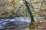 Autumn Tree by the River Nidd in Nidd Gorge Woods Photographic Print by Mark Sunderland