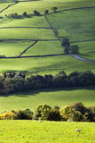 Fields and Dry Stone Walls in Nidderdale Photographic Print by Mark Sunderland