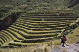Inca Terracing in the Sacred Valley, Pissac, Peru, South America Photographic Print by Peter Groenendijk