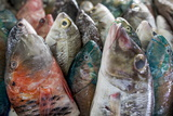 A Collection of Fish for Sale in Kudat Fish Market Photographic Print by James Morgan