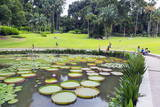 Lily Pads, Botanic Gardens, Singapore, Southeast Asia, Asia Photographic Print by Christian Kober