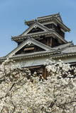 Cherry Blossom and Kumamoto Japanese Castle, Kumamoto, Kyushu, Japan, Asia Photographic Print by Michael Runkel