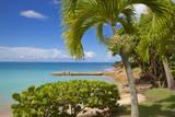 St. Johns, Antigua, Leeward Islands, West Indies, Caribbean, Central America Photographie par Frank Fell