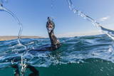 Curious Flightless Cormorant (Phalacrocorax Harrisi) Underwater at Tagus Cove Photographic Print by Michael Nolan