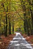 Burnham Beeches, Buckinghamshire, England, United Kingdom, Europe Photographic Print by Mark Mawson