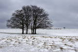 Clump of Winter Trees Photographic Print by Stuart Black