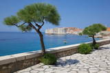View of Old Town, UNESCO World Heritage Site, Dubrovnik, Dalmatia, Croatia, Europe Photographic Print by Frank Fell