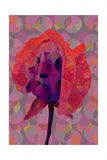 Tea Rose 3 Giclee Print by Scott J. Davis
