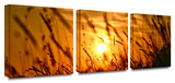 Summer Field 3-Piece Canvas Set Gallery Wrapped Canvas Set by Mark Wilson