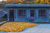 Maize (Corn) Drying, Gubeikou, Miyun County, Beijing Municipality, China, Asia Photographic Print by Alan Copson