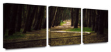 Forest Trail 3-Piece Canvas Set Prints by Revolver Ocelot