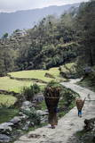 A Woman and Daughter Carry Firewood in Dolkas Back Home to Ghandruk, Nepal, Asia Photographic Print by Andrew Taylor