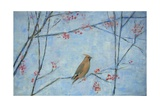 Waxwing, 2013 Giclee Print by Ruth Addinall