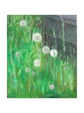 Dandelion Clocks in Grass, 2008 Giclee Print by Ruth Addinall
