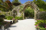 Abbey Gardens, Isle of Tresco, Isles of Scilly, United Kingdom, Europe Photographic Print by Peter Barritt