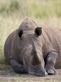 White Rhinoceros (Ceratotherium Simum), Hluhluwe Game Reserve, South Africa, Africa Photographic Print by James Hager