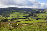 Sheep Grazing Farmland in Nidderdale Photographic Print by Mark Sunderland