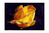 Yellow Rose Giclee Print by Scott J. Davis
