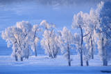Frost Crystals Sparkle on Cottonwood Trees in Winter Photographic Print by Tom Murphy