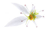 The Stamens of a Begonia Flower Fotografisk tryk af Robert Llewellyn
