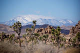 Joshua Trees and Snow Covered Mountains in Southern California Lámina fotográfica por Ben Horton