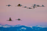 Sandhill Cranes, Grus Canadensis, Migrating over the Sangre De Cristo Mountains Photographic Print by Keith Ladzinski