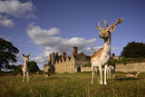 Deer in the Knole House Deep Park, One of the Few Remaining in England Photographic Print by Jim Richardson