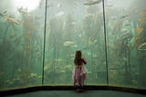 A Youngster Stands before Fronds of Giant Kelp, Two Oceans Aquarium in Cape Town Photographic Print by Joel Sartore